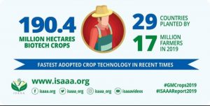Africa Leads Progress in Biotech Crop Adoption with Doubled Number of Planting Countries in 2019, ISAAA Reports